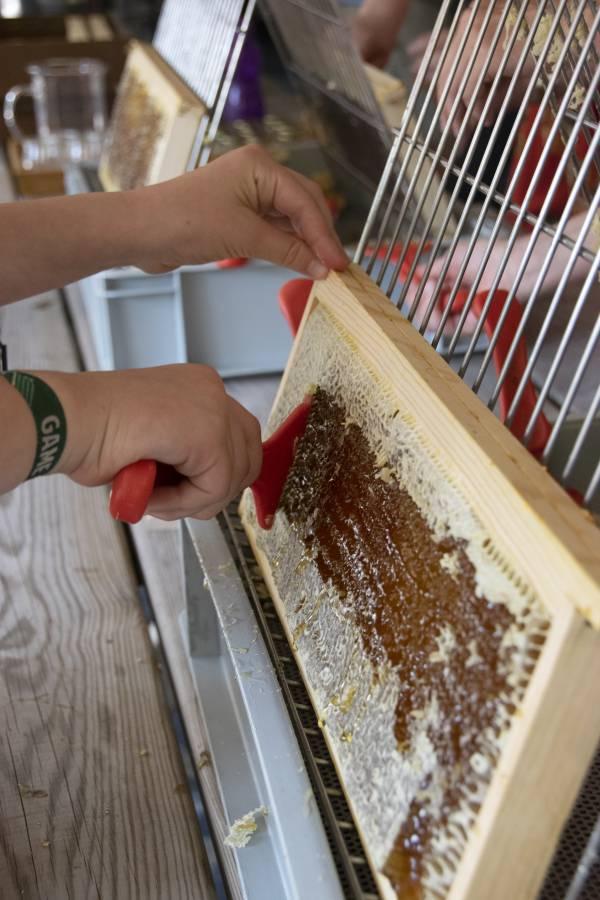 Honingoogst