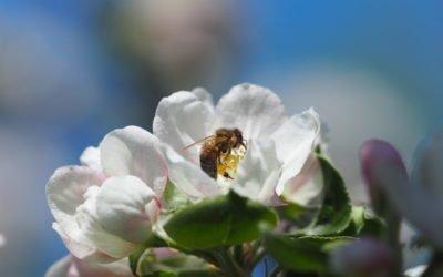 «Histoires d'abeilles» : l'exposition bourdonnante de l'été